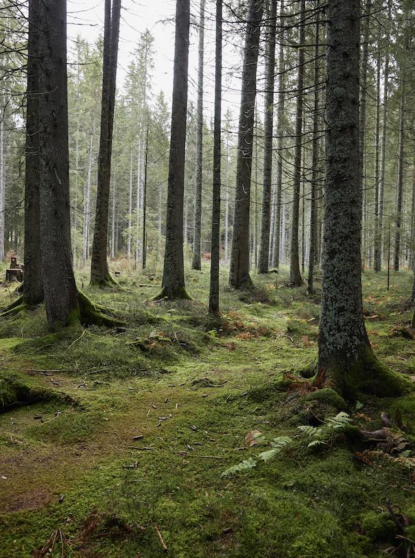 Wood Wide Web Bäume im schwarzwald